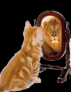 gato leon[1]