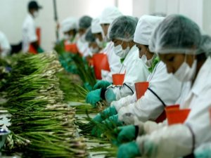 agroexportación