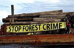 Greenpeace illegal logging action