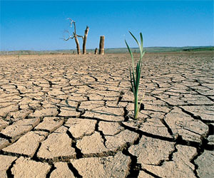 Desarrollo Forestal y Cambio Climático PUCP