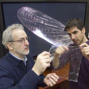 Reproducen estructura biodegradable más resistente que elplástico