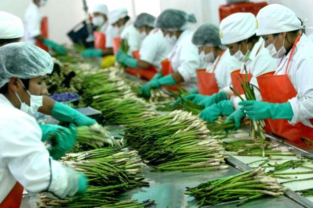 agroexportaciones peruanas espárragos