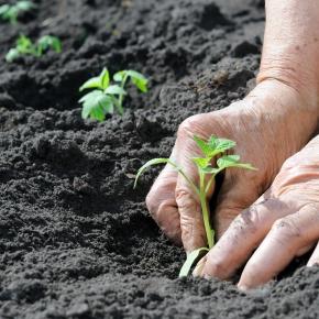Perú ocupa el puesto 55 de 113 países con 'buen ambiente' en seguridad alimentaria segúnGFSI