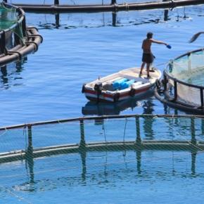 Concesiones y autorizaciones acuícolas por primera vez podrán ser registradas en Sunarp segúnResolución