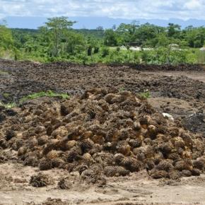 Toxicidad en el agua y mortandad masiva de peces por las operaciones del Grupo Palmas denuncian catorce pueblos en la Provincia del AltoAmazonas