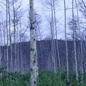 ADEX: Gobierno debe tomar medidas para evitar incendios forestales enPerú