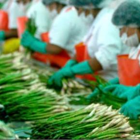Adex: Gremios productivos esperan ampliación de Ley de promoción agraria en el marco del gobierno para dinamizar laeconomía