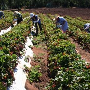 CAF destinó más de USD 70 millones para entidades microfinancieras de AméricaLatina