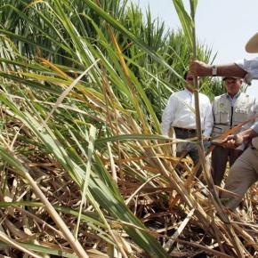 Industria azucarera peruana cubrió demanda interna y generó un excedente en el 2019: Perucaña, Memoria Anual del Sector Agroindustrial del Azúcar yDerivado