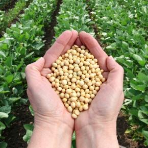 Congreso de la República del Perú aprobó ampliación de moratoria para cultivos transgénicos hasta el2035