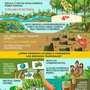 ¿Qué podemos hacer como ciudadanos para conservar los bosques tropicales? Proveedores de oxígeno, medicamentos, alimentos, reguladores del agua y del clima, biodiversidad,y másbeneficios